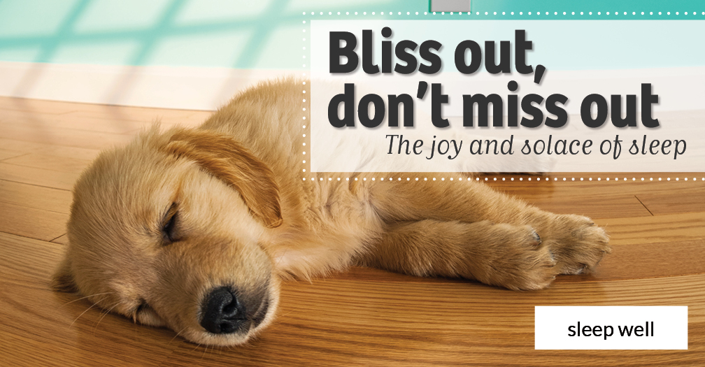 Bliss out, don't miss out: The joy and solace of sleep